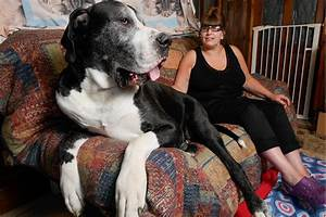 This Great Dane's owners thought they bought a terrier ...
