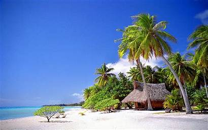 Palm Tropical Beach Trees Landscape Cabin Sand
