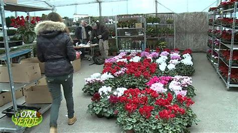 mercato dei fiori napoli vendita fiori all ingrosso mercato dei fiori andamento