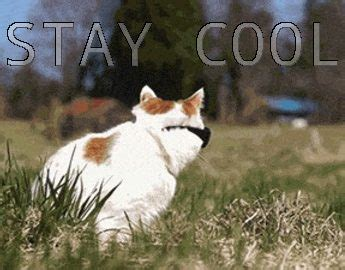 Stay Cool Meme - cat fun memes funny cats image 2868429 by yanito on favim com