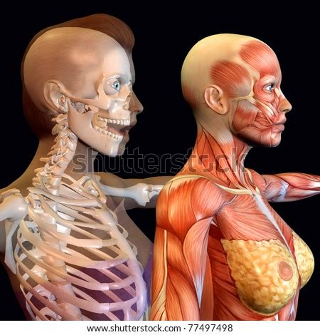 Several women were upset that they weren't taught this in school. Anatomy Face Muscle Stock Photos, Images, & Pictures | Shutterstock
