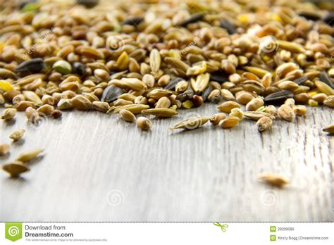 bird seed mix differential focus stock photo image
