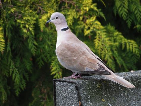 uk garden bird identification