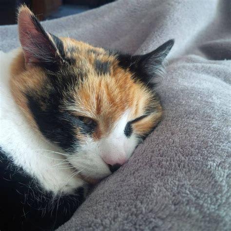 crazy cat calico lady cats sleeping