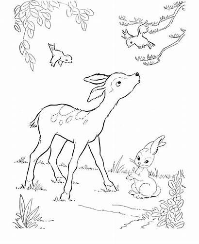 Deer Coloring Pages Printable