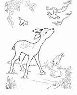 Coloring Pages Deer Baby sketch template