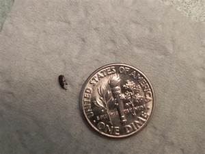 tiny bugs in bathroom 6 small black beetle like bug With little black bugs in bathroom