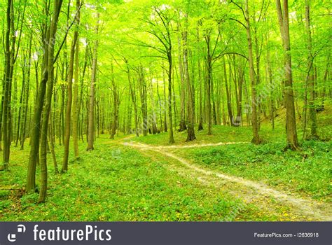 Green Forest by Light Green Forest Picture