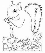 Squirrel Coloring Pages Printable Animal Squirrels Sheets Wild Popular Rescue Getdrawings Getcolorings Coloringhome sketch template