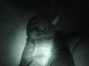 Wie Fange Ich Eine Katze : nachts wie eine katze sehen patrick ~ Markanthonyermac.com Haus und Dekorationen