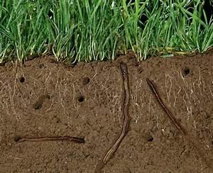 Vers De Terre Acheter : les jardiniers de l 39 ombre la salamandre ~ Nature-et-papiers.com Idées de Décoration