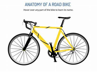 Anatomy Bike Road Storyline Explore Project Learning