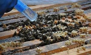 Was Vertreibt Bienen : brutfrei mit oxals ure gegen varroamilben der bienenblog ~ Eleganceandgraceweddings.com Haus und Dekorationen