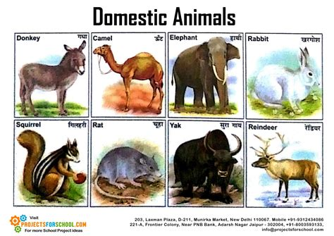 Kids Science Projects Domestic Animals 2 Free Download