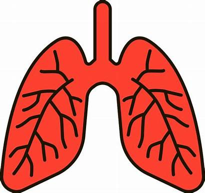 Lungs Clipart Human Anatomy Transparent Creazilla Breath