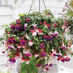 Pflanzen Für Schattigen Balkon : balkonpflanzen h ngend f r eine ppige bepflanzung auf dem ~ Watch28wear.com Haus und Dekorationen