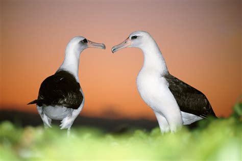 surprising behaviors  nonhuman animals howstuffworks