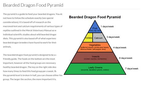 beardie food pyramid bearded dragon org