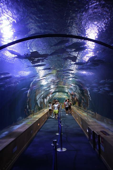 bureau veritas valence aquarium valence espagne tarif 28 images file valencia