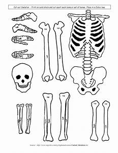 skeletal system model cut outs for children kids With skeleton template to cut out