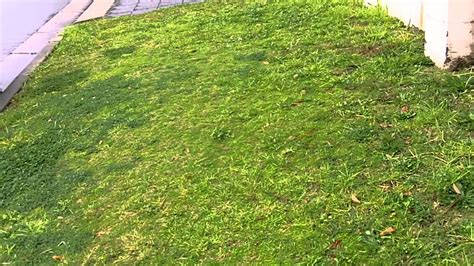 [couch Grass] [couch Lawn Care] [bermuda Grass Australia