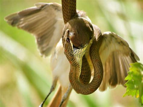 wildlife photography editing tips