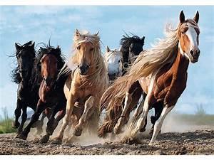 TREFL JIGSAW PUZZLE - Galopping Horses 1000 Piece