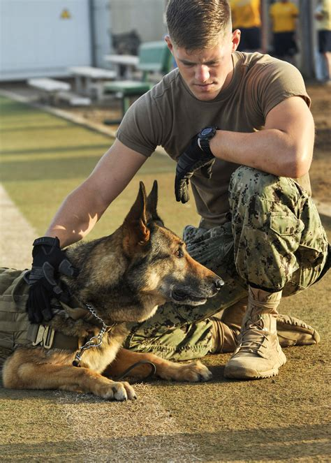 training  navy seal military war dogs sofrep