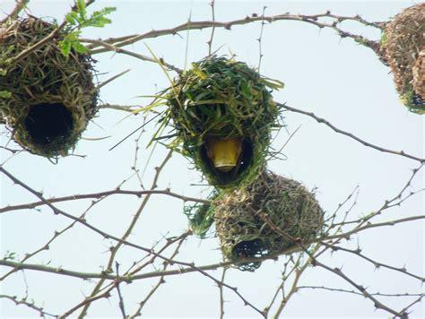 SilentStars: Bird nests make me smile. They do!!