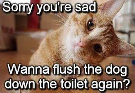 Funny Cat  Sorry Youre Sad