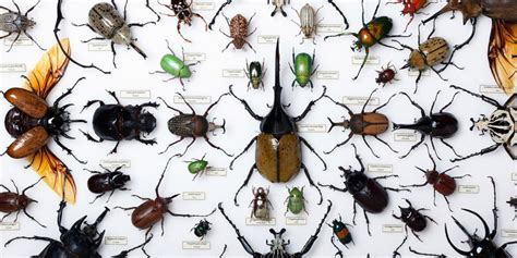 Types Of Beetle Bugs Species Pictures To Pin On Pinterest