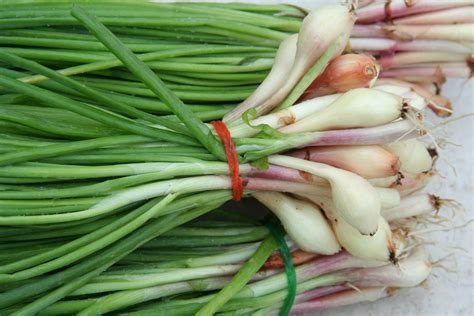 what are scallions file greenonions jpg wikimedia commons
