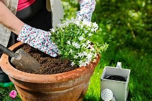 Ab Wann Erdbeeren Pflanzen : bildquelle jari hindstroem ~ Eleganceandgraceweddings.com Haus und Dekorationen