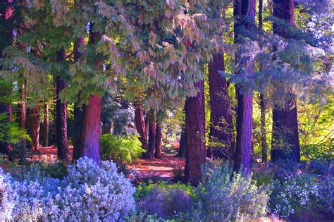 壁纸 : 森林, 花园, 性质, 开花, 树, 秋季, 叶, 厂, 季节, 植物区系, 草地, 野花, 林地, 植物 ...