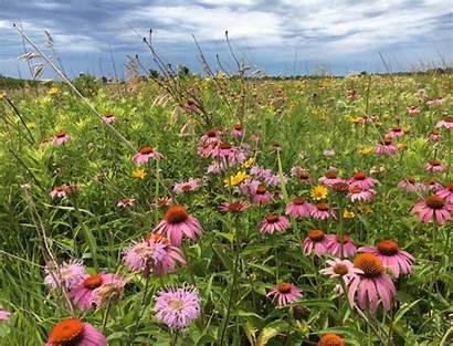 Pollinator Mix Coastal Arkansas Quail Plains Crp