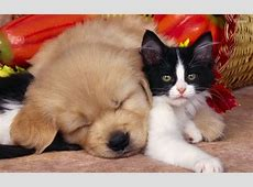 dog and cat HD Wallpaper Background Image 1920x1200