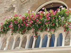 Kletterpflanzen Für Balkon : mediterrane k belpflanzen holen sie sich den sommer nach hause ~ Buech-reservation.com Haus und Dekorationen