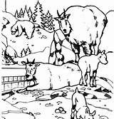 Goat Coloring Mountain sketch template