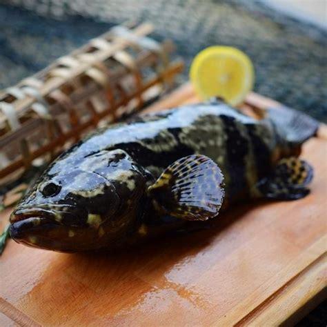 grouper tiger dragon ninja fish singapore food delivery fresh