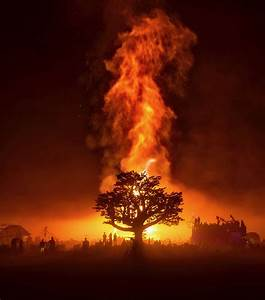 The, Tree, Of, Tenere, On, Temple, Burn, Night, Burningman