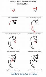 How To Draw A Brushtail Possum