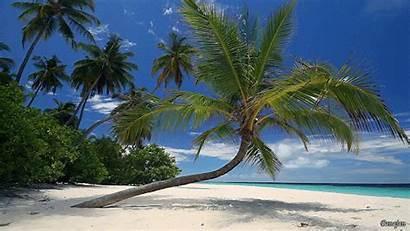 Beach Palm Island Tree Water Tropical Trees