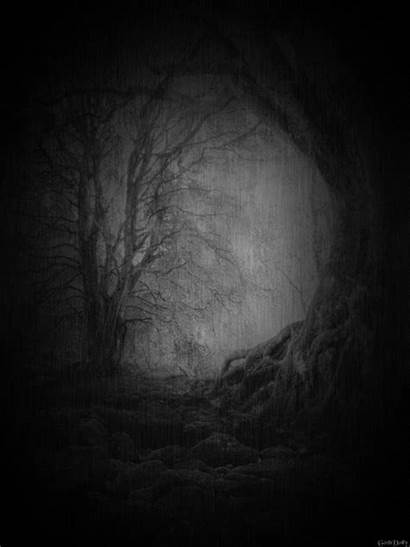 Animated Dark Forest Nature Trees Gifs Tree