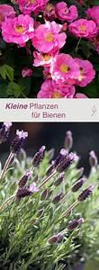 die besten 25 blumen bilder ideen auf pinterest bilder With whirlpool garten mit bienenfreundliche pflanzen für balkon und garten