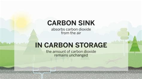 carbon sink youtube