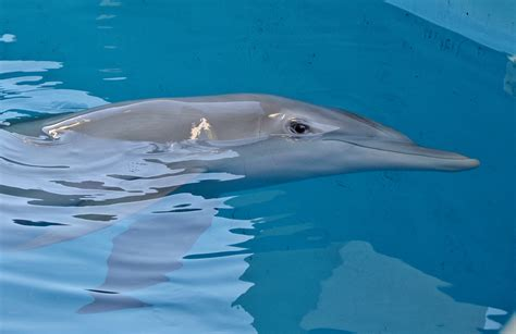 Winter the Dolphin When She Was Found