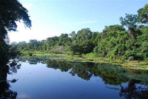 rainforest amazon peru brazil rio puerto maldonado flickr jungle places reflection ivan mlinaric airlines destination ecuador airports they dream