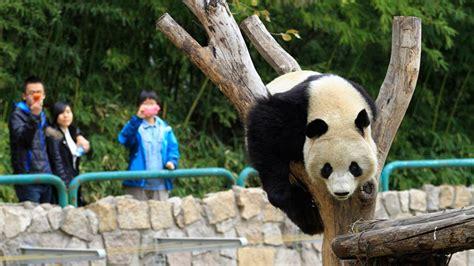 zoos animals chinese zoo rare beijing adventure china outdoors panda travel worlds travelchannel monkey visit