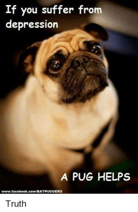 Depressed Pug Meme - if you suffer from depression a pug helps wwwfacebookcombatpuggi ers truth facebook meme on sizzle