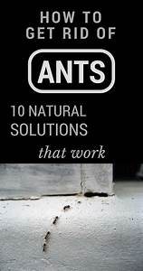 how to get rid of black ants the happy housewife autos post With how to get rid of ants in your bathroom